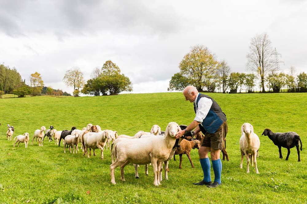 Tiere am Schörhof - eigene Bio-Landwirtschaft