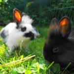 Hasen am Schörhof, einem Paradies für Streicheltiere - und Kinder