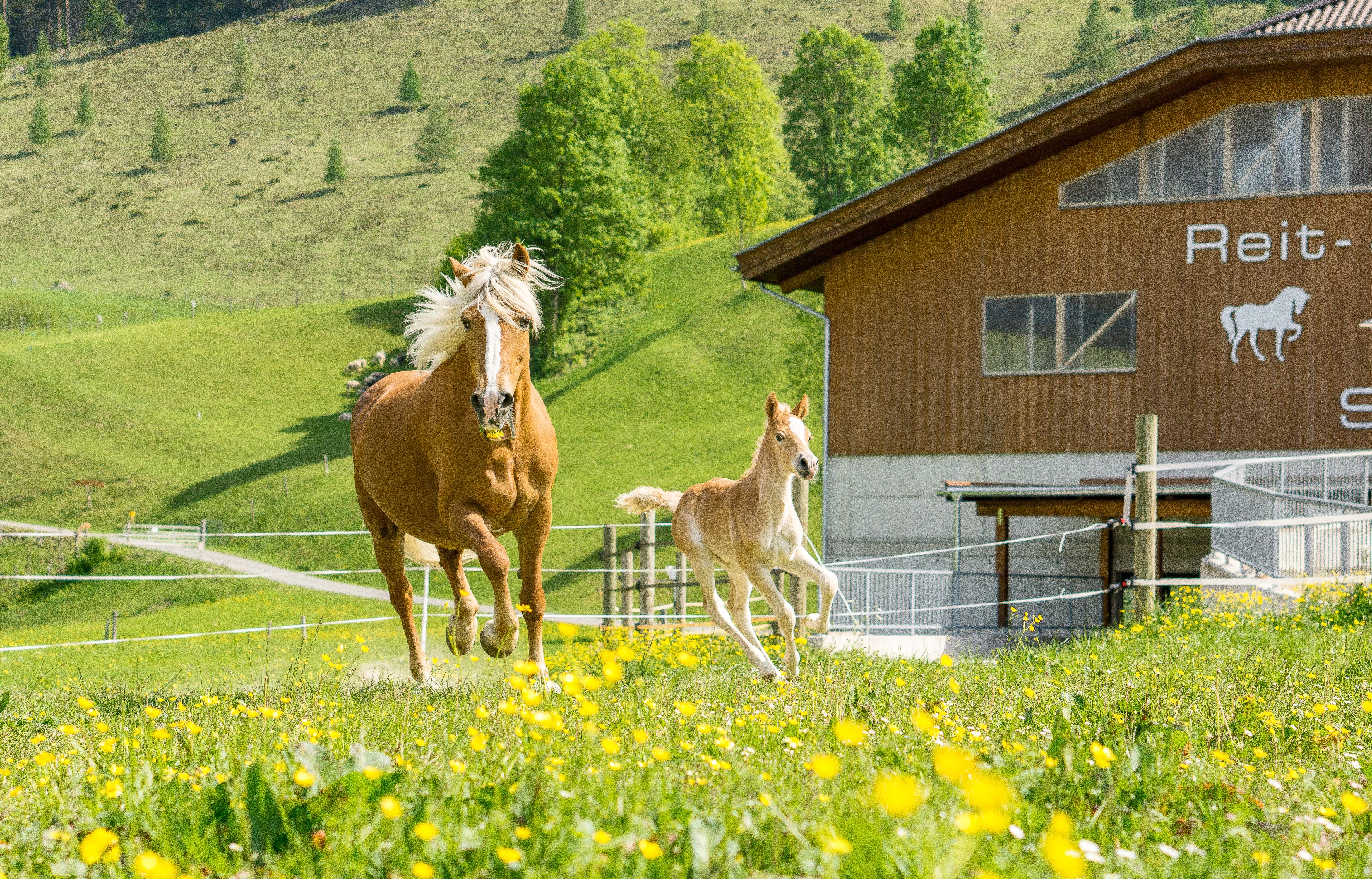 Pferde am Tierparadies Schörhof