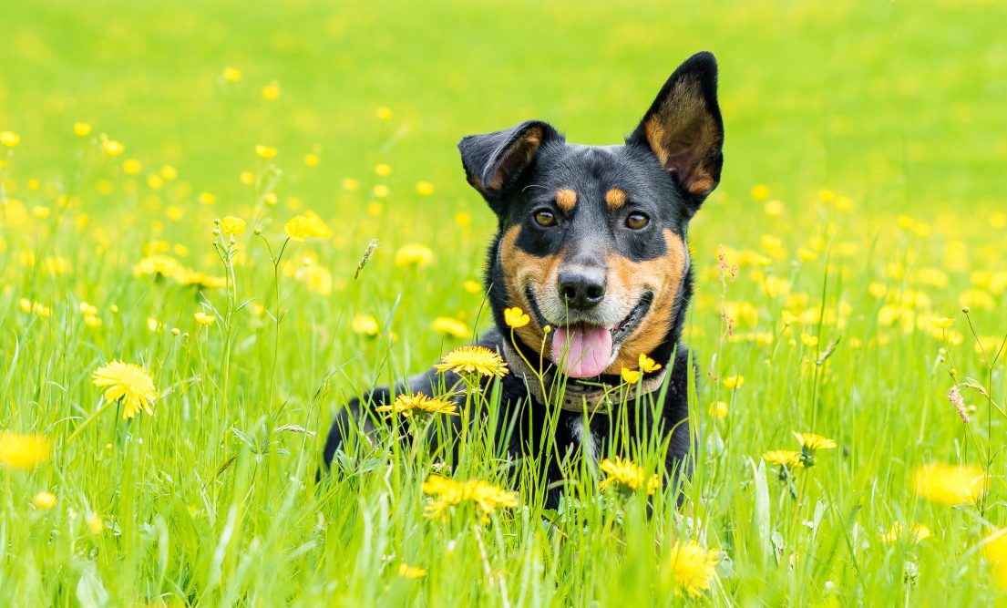 Schörhof Hund Jackson
