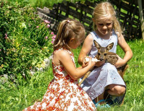 Rehkitz adoptiert: Fini genießt das große Herz für Tiere am Schörhof