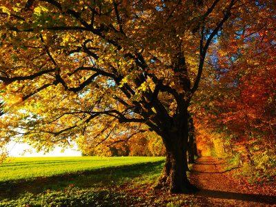 Herbst am Schörhof - Österreich, Salzburger Land