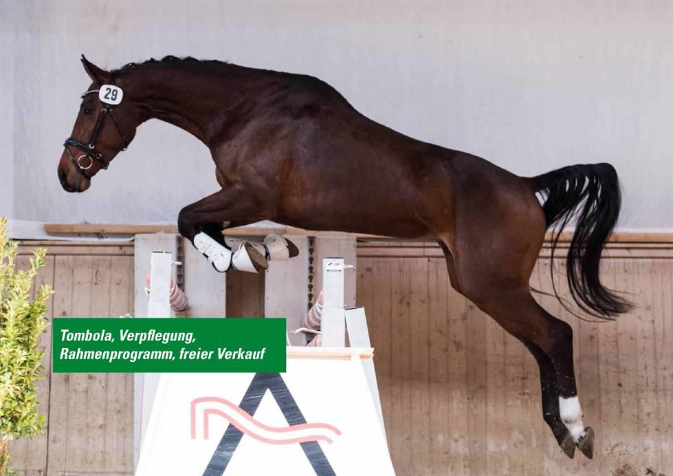 Pferde Championat Freisprung Dressur
